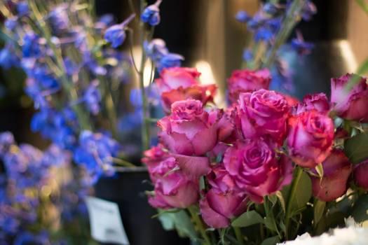 Bouquet Flower Rose #118395