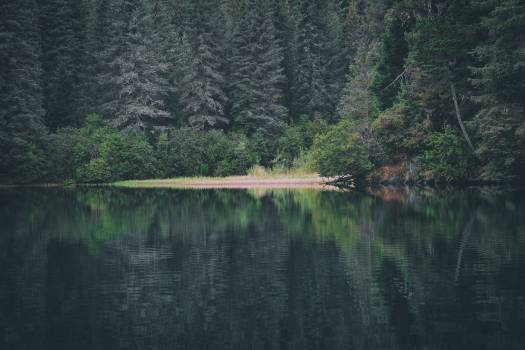 Landscape Forest Water #11878