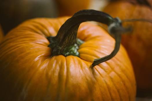 Pumpkin Squash Vegetable #11883