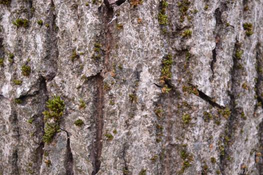Tree Bark Forest #119279
