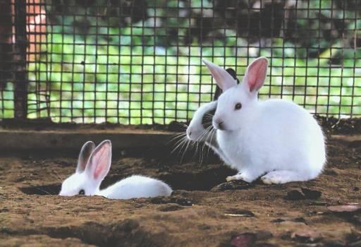 Bunny Rabbit Mammal Free Photo