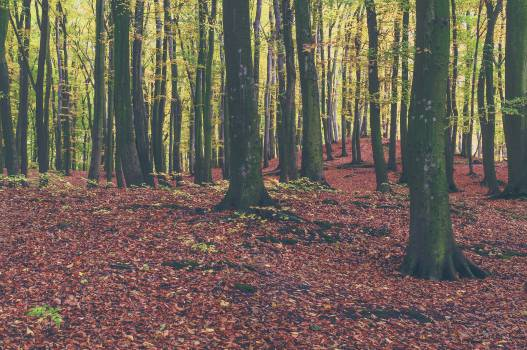 Landscape Tree Forest #11943