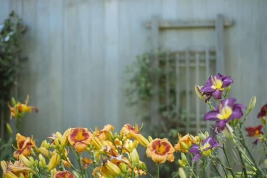 Flower Tulip Spring #11976