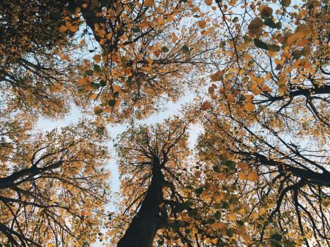 Oak Tree Forest #12002