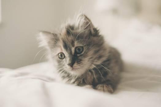 Cat Kitten Feline #12021