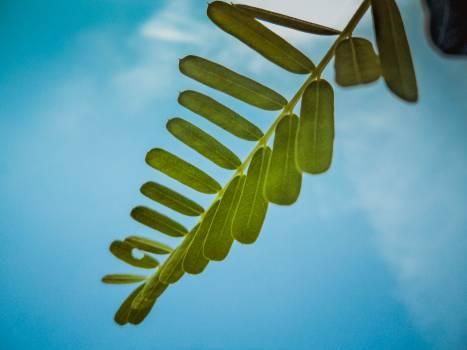 Leaf Plant Spring #120308