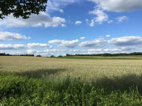 Field Wheat Farming Free Photo