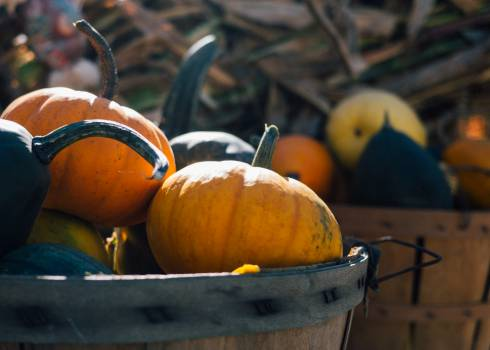 Pumpkin Squash Vegetable #12048