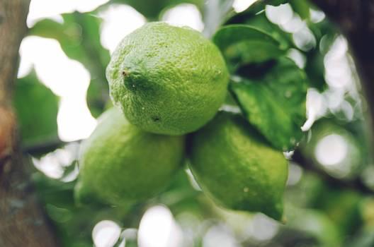 Lemon Citrus Edible fruit #121438