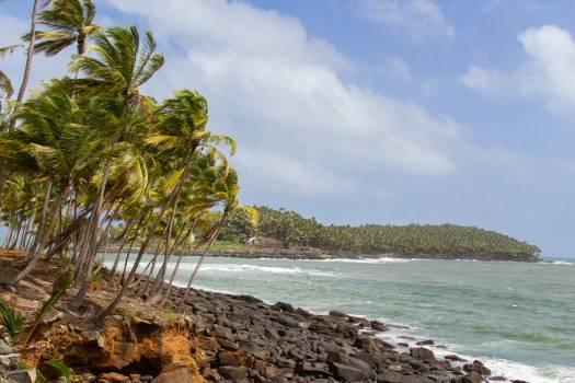 Tree Water Beach #121495