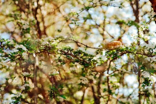 Branch Plant Leaf #12189