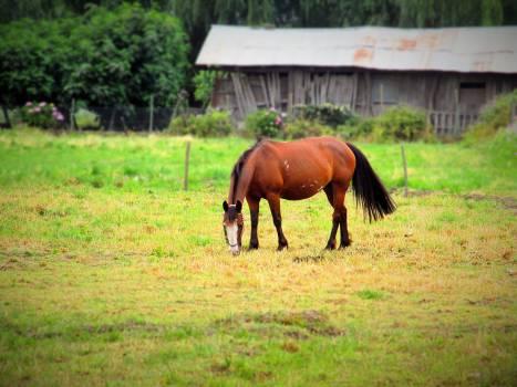Horse Horses Farm Free Photo