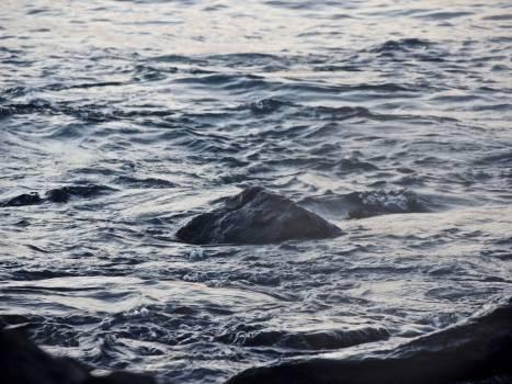 Baleen whale Whale Sea #122008