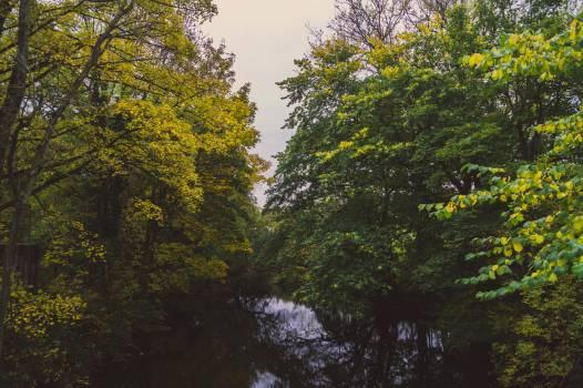 Tree Oak Forest Free Photo