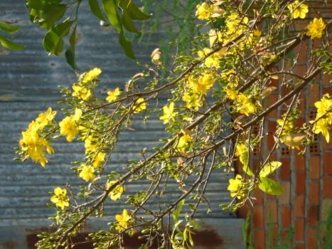 Plant Branch Tree Free Photo