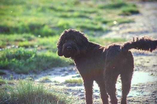 Retriever Sporting dog Dog #122240