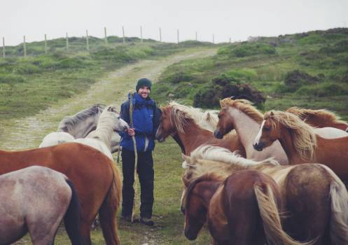Horse Resort Horses #122847