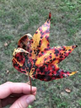 Lily Starfish Echinoderm Free Photo