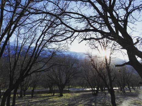 Tree Trees Park bench #123249
