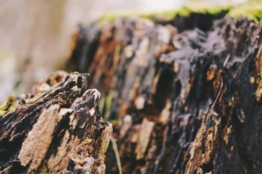Camouflage Lizard Screen Free Photo