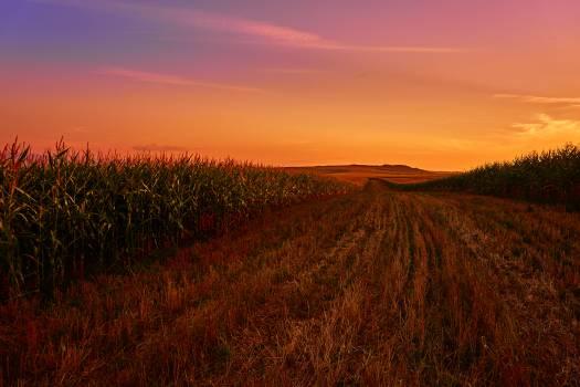 Field Land Landscape Free Photo