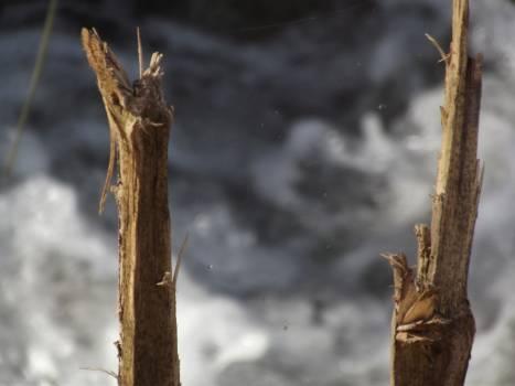Wheat Stalk Plant Free Photo