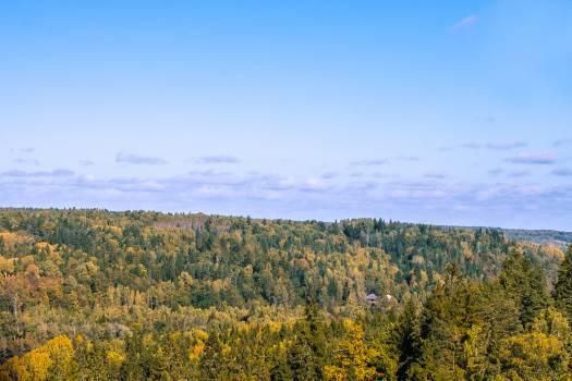 Field Sky Landscape #12453