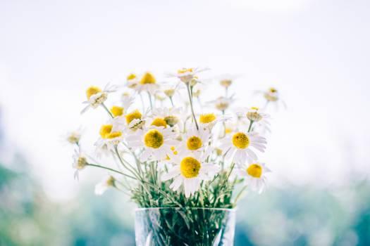 Flower Spring Plant #12478
