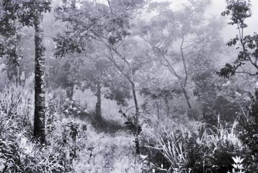 Tree Snow Silver tree #124817