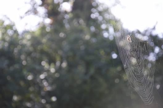 Spider web Pattern Web Free Photo