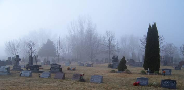 Cemetery Landscape Tree Free Photo