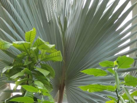 Leaf Palm Plant part Free Photo