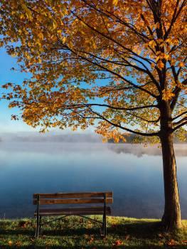 Landscape Tree Sky #12504