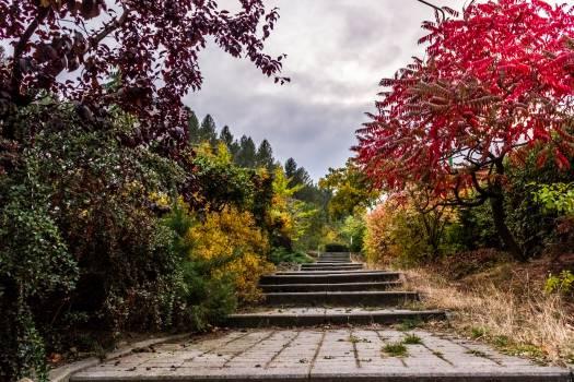 Tree Bench Park #12509