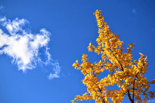 Sky Clouds Landscape #12542