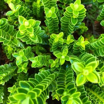 Plant Fern Leaf #12552
