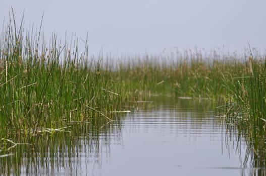 Lake Landscape Swamp Free Photo