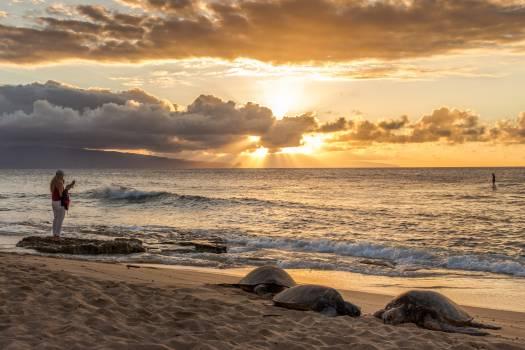 Beach Sea Ocean #125741