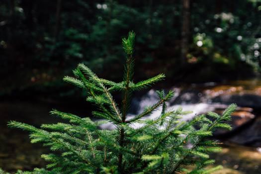 Plant Branch Leaf #12600