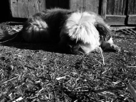 Skunk Musteline mammal Mammal #126196