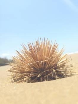 Sea urchin Echinoderm Cactus #12620