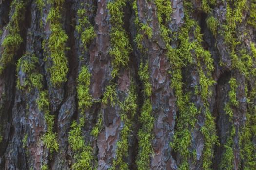 Tree Landscape Forest #12665