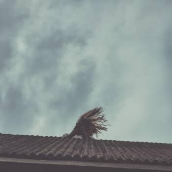 Vulture Bird Sky #126838