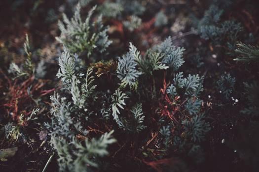 Tree Pine Fir #12704