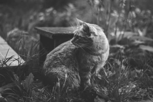 Cat Feline Animal #127482