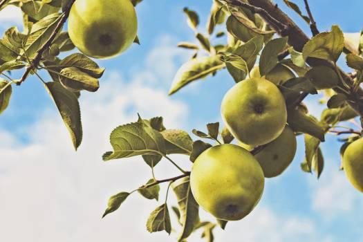 Edible fruit Fruit Citrus #127520