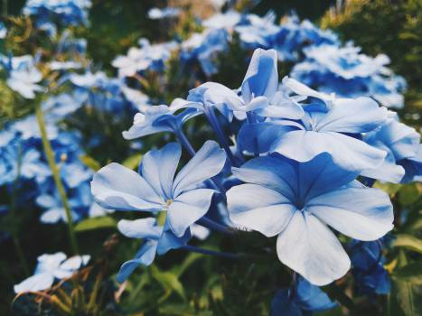 Bulb Flower Plant #12770