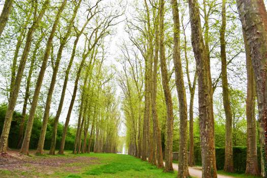 Forest Landscape Tree #12826
