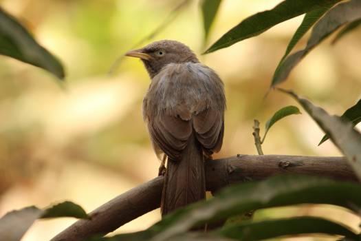 Bird Nightingale Thrush Free Photo