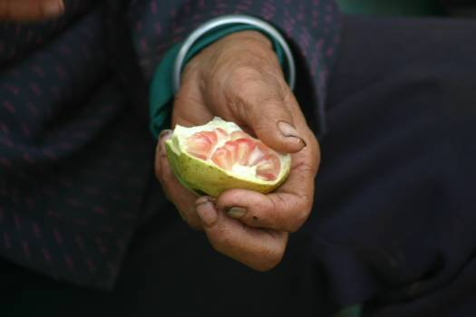Edible fruit Fruit Guava #128527